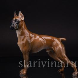 Фигурка собаки из фарфора Боксер, Rosenthal, Германия, вт пол. 20 века.